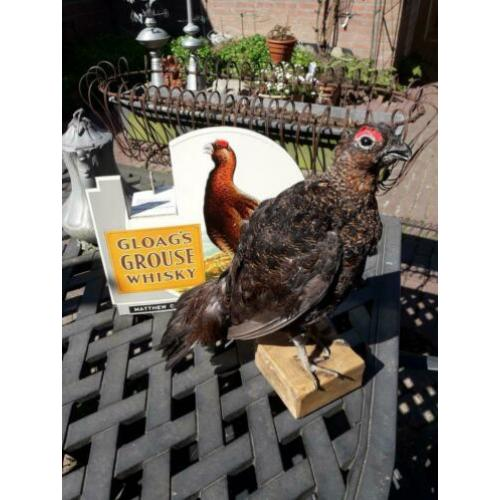 Schotse Grouse taxidermie Whisky